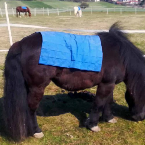 Pferde-Weide2